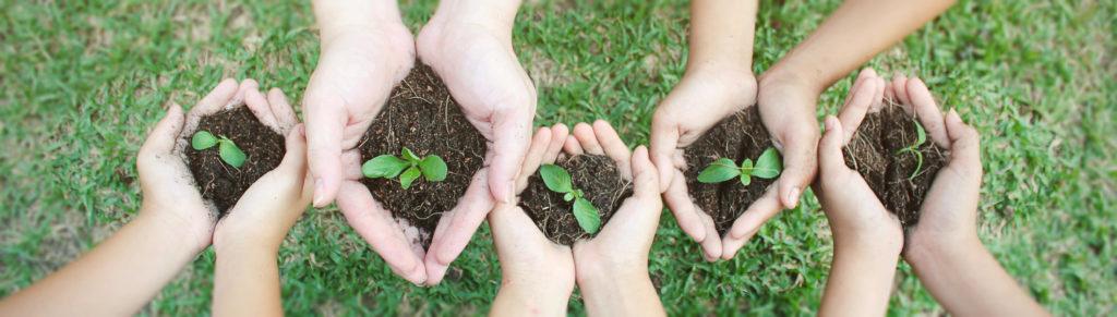Children holding saplings in hands
